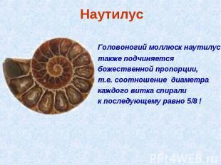 Наутилус Головоногий моллюск наутилус также подчиняется божественной пропорции,