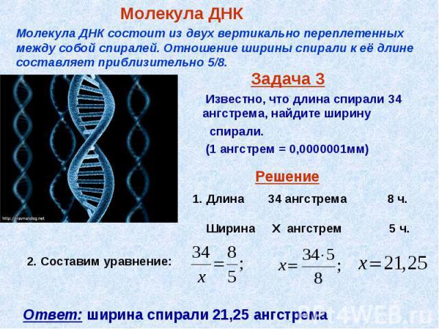 Задача 3 Известно, что длина спирали 34 ангстрема, найдите ширину спирали. (1 ангстрем = 0,0000001мм)
