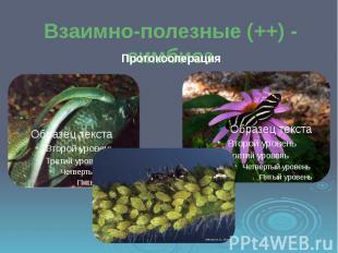 Взаимно-полезные (++) - симбиоз Протокооперация
