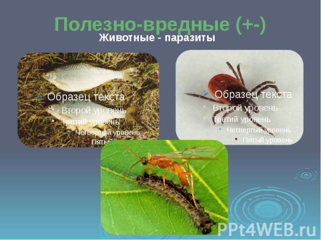 Полезно-вредные (+-) Животные - паразиты