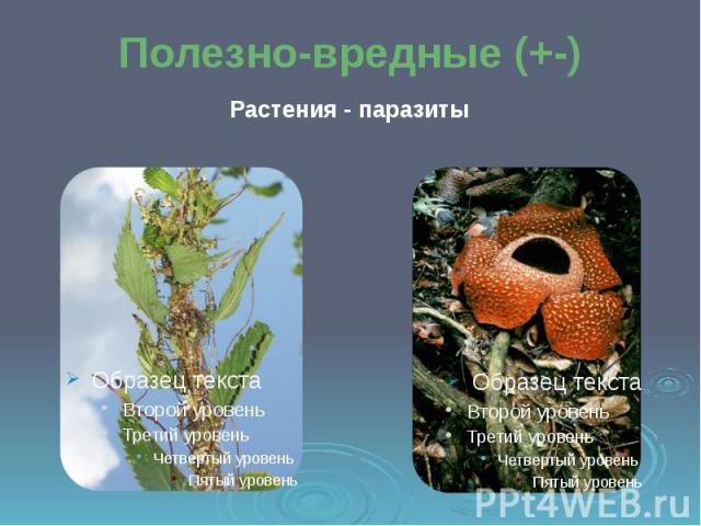 Полезно-вредные (+-) Растения - паразиты