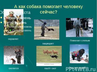 А как собака помогает человеку сейчас?