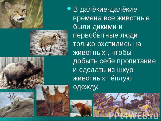 В далёкие-далёкие времена все животные были дикими и первобытные люди только охотились на животных , чтобы добыть себе пропитание и сделать из шкур животных тёплую одежду.