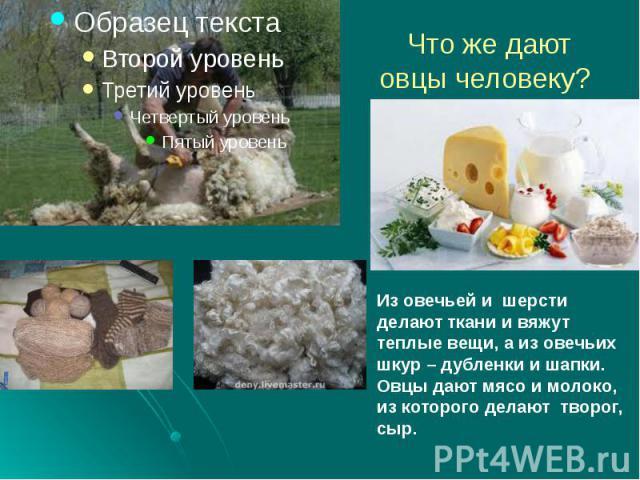 Что же дают овцы человеку?