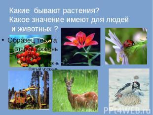 Какие бывают растения? Какое значение имеют для людей и животных ?
