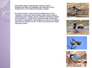 Небольшие запасы корма делают вороны и сорока, припрятывая пищу под опавшими лис