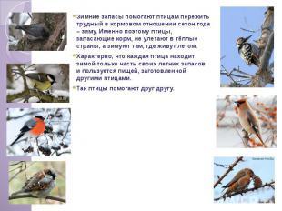 Зимние запасы помогают птицам пережить трудный в кормовом отношении сезон года –