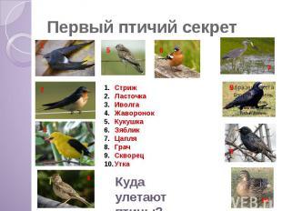 Первый птичий секрет