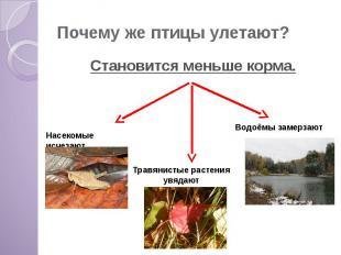 Почему же птицы улетают? Становится меньше корма.