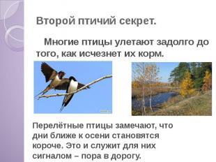 Второй птичий секрет. Многие птицы улетают задолго до того, как исчезнет их корм