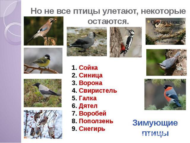 Но не все птицы улетают, некоторые остаются.