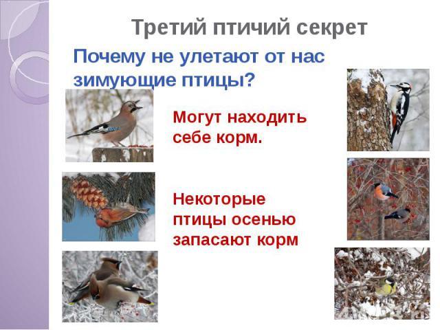 Третий птичий секрет Почему не улетают от нас зимующие птицы?