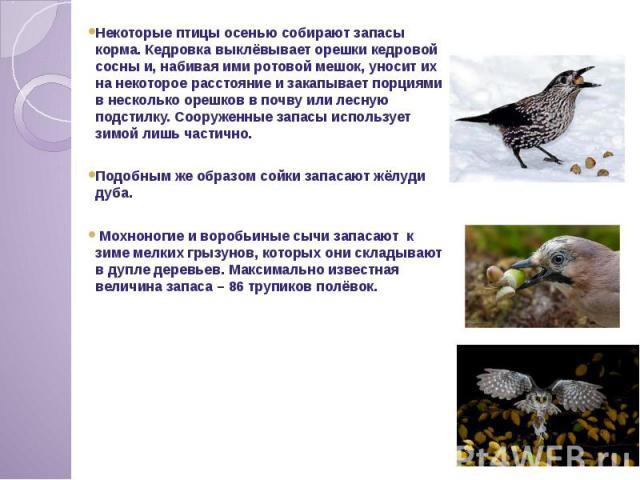 Некоторые птицы осенью собирают запасы корма. Кедровка выклёвывает орешки кедровой сосны и, набивая ими ротовой мешок, уносит их на некоторое расстояние и закапывает порциями в несколько орешков в почву или лесную подстилку. Сооруженные запасы…