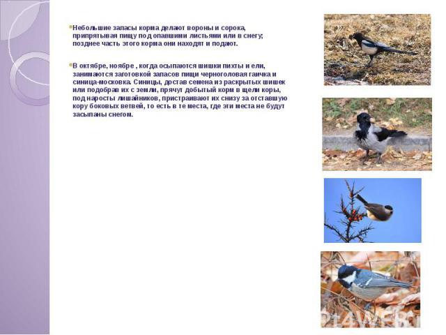 Небольшие запасы корма делают вороны и сорока, припрятывая пищу под опавшими листьями или в снегу; позднее часть этого корма они находят и подают. В октябре, ноябре , когда осыпаются шишки пихты и ели, занимаются заготовкой запасов пищи черноголовая…