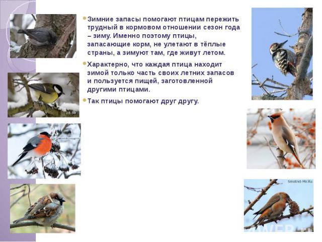 Зимние запасы помогают птицам пережить трудный в кормовом отношении сезон года – зиму. Именно поэтому птицы, запасающие корм, не улетают в тёплые страны, а зимуют там, где живут летом. Характерно, что каждая птица находит зимой только часть своих ле…