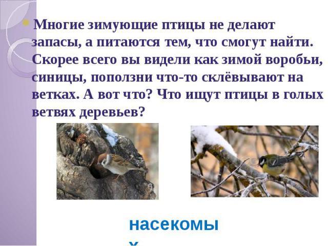 Многие зимующие птицы не делают запасы, а питаются тем, что смогут найти. Скорее всего вы видели как зимой воробьи, синицы, поползни что-то склёвывают на ветках. А вот что? Что ищут птицы в голых ветвях деревьев?
