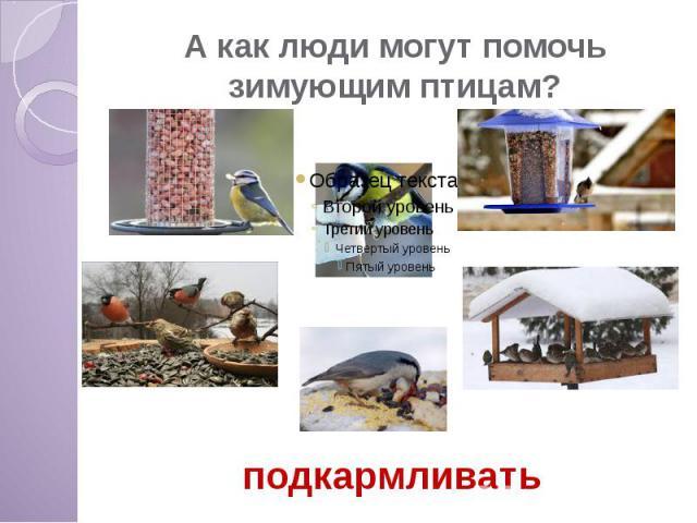А как люди могут помочь зимующим птицам?