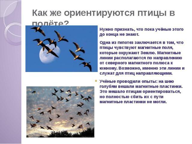 Как же ориентируются птицы в полёте? Нужно признать, что пока учёные этого до конца не знают. Одна из гипотез заключается в том, что птицы чувствуют магнитные поля, которые окружают Землю. Магнитные линии располагаются по направлению от северного ма…