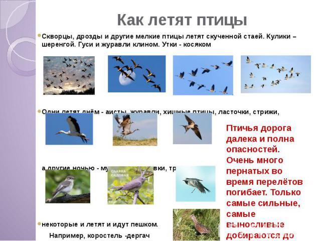 Как летят птицы Скворцы, дрозды и другие мелкие птицы летят скученной стаей. Кулики – шеренгой. Гуси и журавли клином. Утки - косяком Одни летят днём - аисты, журавли, хищные птицы, ласточки, стрижи, а другие ночью - мухоловки, славки, трясогузки не…