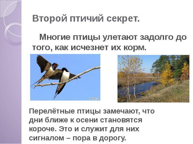 Второй птичий секрет. Многие птицы улетают задолго до того, как исчезнет их корм.
