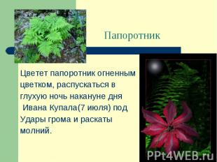 Цветет папоротник огненным цветком, распускаться в глухую ночь накануне дня Иван