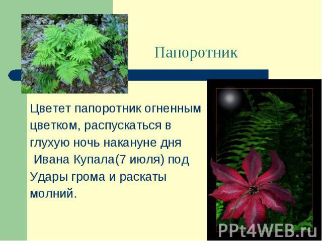Цветет папоротник огненным цветком, распускаться в глухую ночь накануне дня Ивана Купала(7 июля) под Удары грома и раскаты молний.