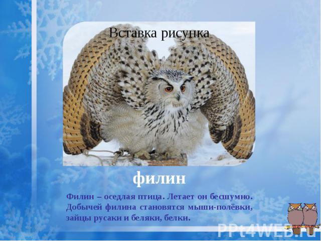 филин Филин – оседлая птица. Летает он бесшумно. Добычей филина становятся мыши-полёвки, зайцы русаки и беляки, белки.