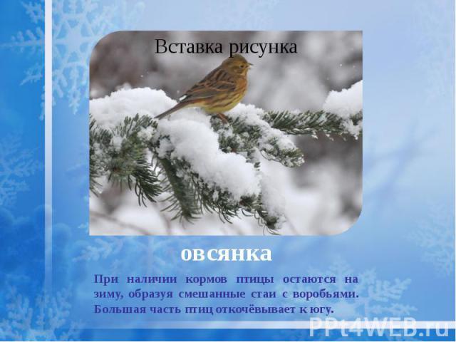 овсянка При наличии кормов птицы остаются на зиму, образуя смешанные стаи с воробьями. Большая часть птиц откочёвывает к югу.