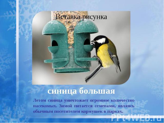 синица большая Летом синица уничтожает огромное количество насекомых. Зимой питается семенами, являясь обычным посетителем кормушек в парках.