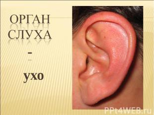 ухо ухо