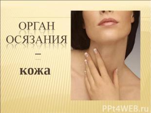 кожа кожа
