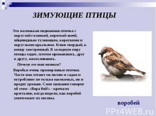 ЗИМУЮЩИЕ ПТИЦЫ Это маленькая подвижная птичка с округлой головкой, короткой шеей