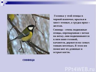 Головка у этой птицы в черной шапочке, крылья и хвост темные, а грудка ярко – же