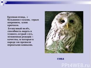 Крупная птица, с большими глазами, серым оперением, клюв крючком. Бесшумный полё
