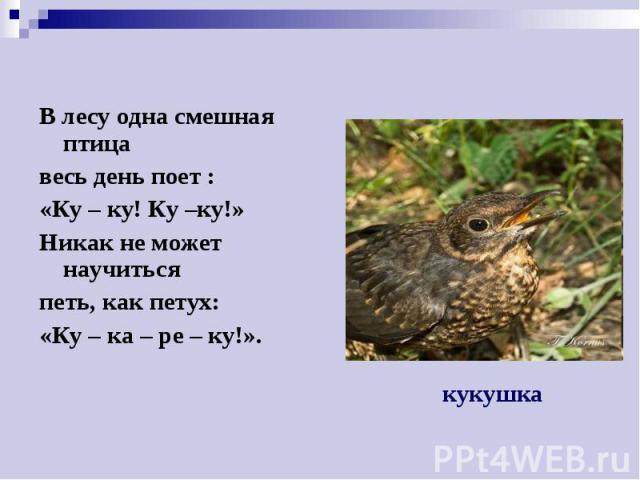 В лесу одна смешная птица В лесу одна смешная птица весь день поет : «Ку – ку! Ку –ку!» Никак не может научиться петь, как петух: «Ку – ка – ре – ку!».