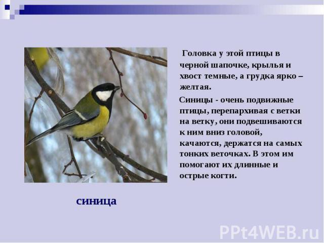 Головка у этой птицы в черной шапочке, крылья и хвост темные, а грудка ярко – желтая. Головка у этой птицы в черной шапочке, крылья и хвост темные, а грудка ярко – желтая. Синицы - очень подвижные птицы, перепархивая с ветки на ветку, они подвешиваю…