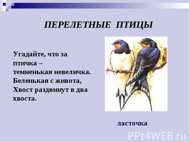 Угадайте, что за птичка – темненькая невеличка. Беленькая с живота, Хвост раздвинут в два хвоста. ПЕРЕЛЕТНЫЕ ПТИЦЫ