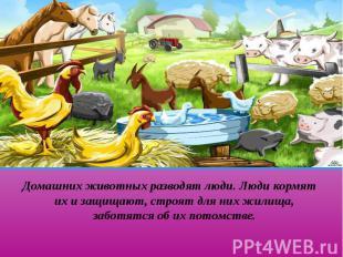 Домашних животных разводят люди. Люди кормят их и защищают, строят для них жилищ