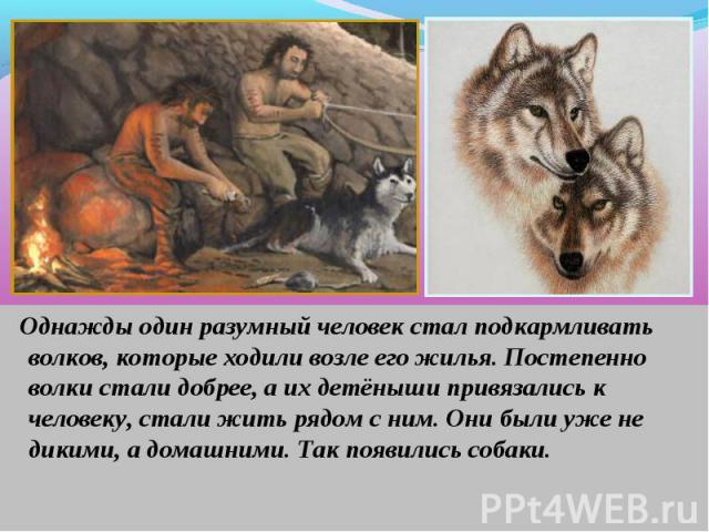 Однажды один разумный человек стал подкармливать волков, которые ходили возле его жилья. Постепенно волки стали добрее, а их детёныши привязались к человеку, стали жить рядом с ним. Они были уже не дикими, а домашними. Так появились собаки. Однажды …