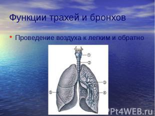 Функции трахей и бронхов Проведение воздуха к легким и обратно