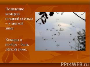 Появление комаров поздней осенью – к мягкой зиме. Комары в ноябре - быть лёгкой