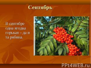 В сентябре одна ягодка горькая – да и та рябина.