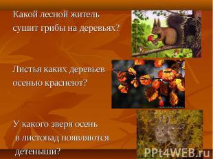 Какой лесной житель Какой лесной житель сушит грибы на деревьях? Листья каких де