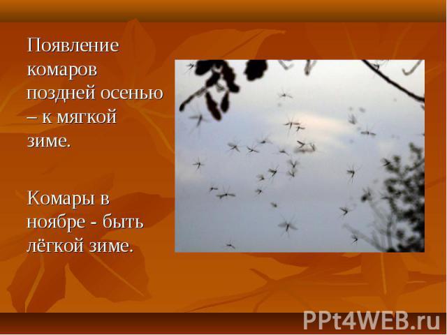 Появление комаров поздней осенью – к мягкой зиме. Комары в ноябре - быть лёгкой зиме.