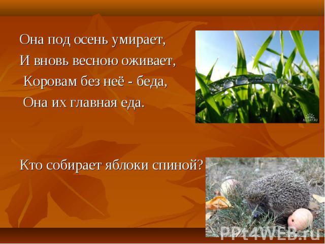 Она под осень умирает, Она под осень умирает, И вновь весною оживает, Коровам без неё - беда, Она их главная еда. Кто собирает яблоки спиной?