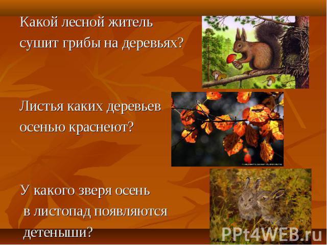 Какой лесной житель Какой лесной житель сушит грибы на деревьях? Листья каких деревьев осенью краснеют? У какого зверя осень в листопад появляются детеныши?