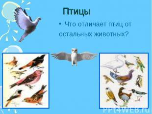 Что отличает птиц от Что отличает птиц от остальных животных?