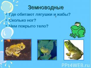 Где обитают лягушки и жабы? Где обитают лягушки и жабы? Сколько ног? Чем покрыто