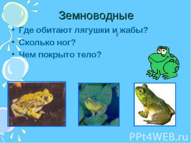 Где обитают лягушки и жабы? Где обитают лягушки и жабы? Сколько ног? Чем покрыто тело?