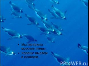 Мы пингвины – морские птицы. Мы пингвины – морские птицы. Хорошо ныряем и плавае
